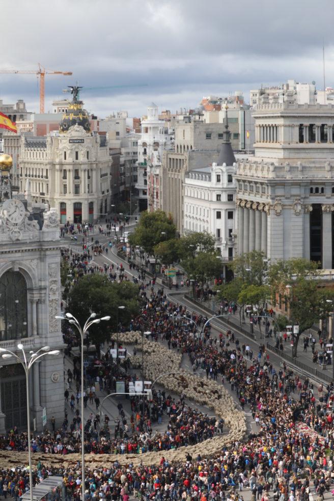 trashumancia Madrid